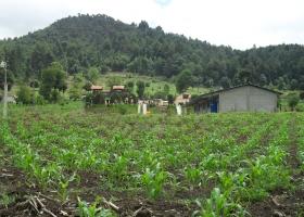 Das Colegio Maya ist umgeben von Maisfeldern